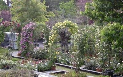 piante decorazione