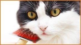 taglio pelo gatti