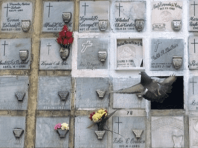 servizi cremazione Forlì