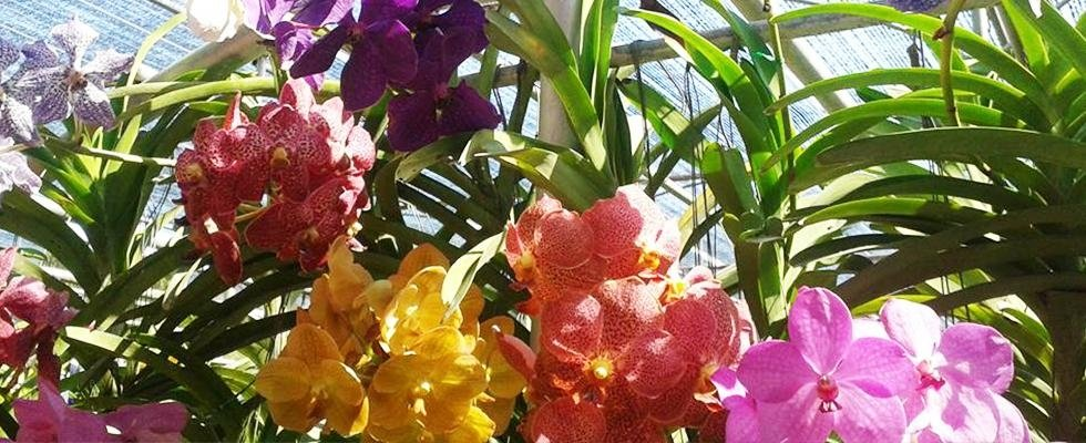Fiorista Linca creazioni floreali - Erbusco, Brescia