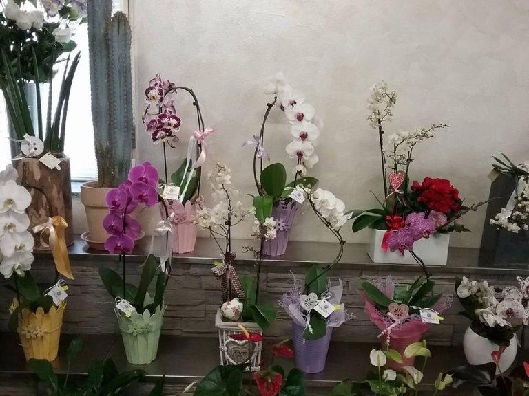 creazioni floreali brescia