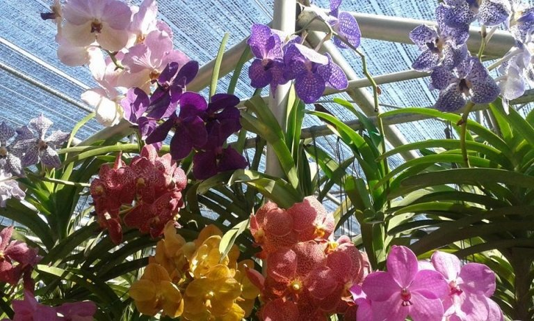fiorista linca