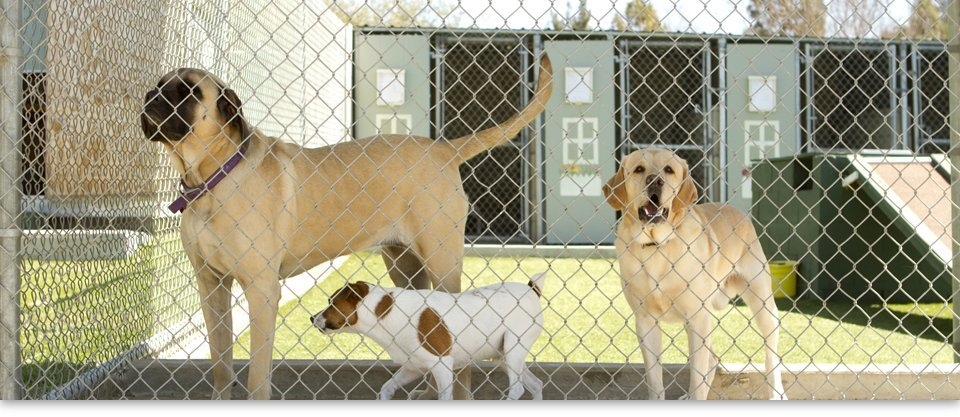dogs in boarding facility
