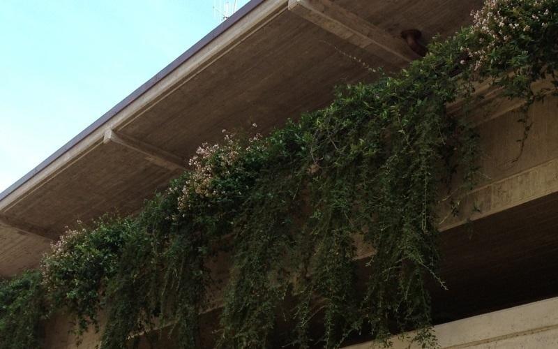 gestione giardino terrazza