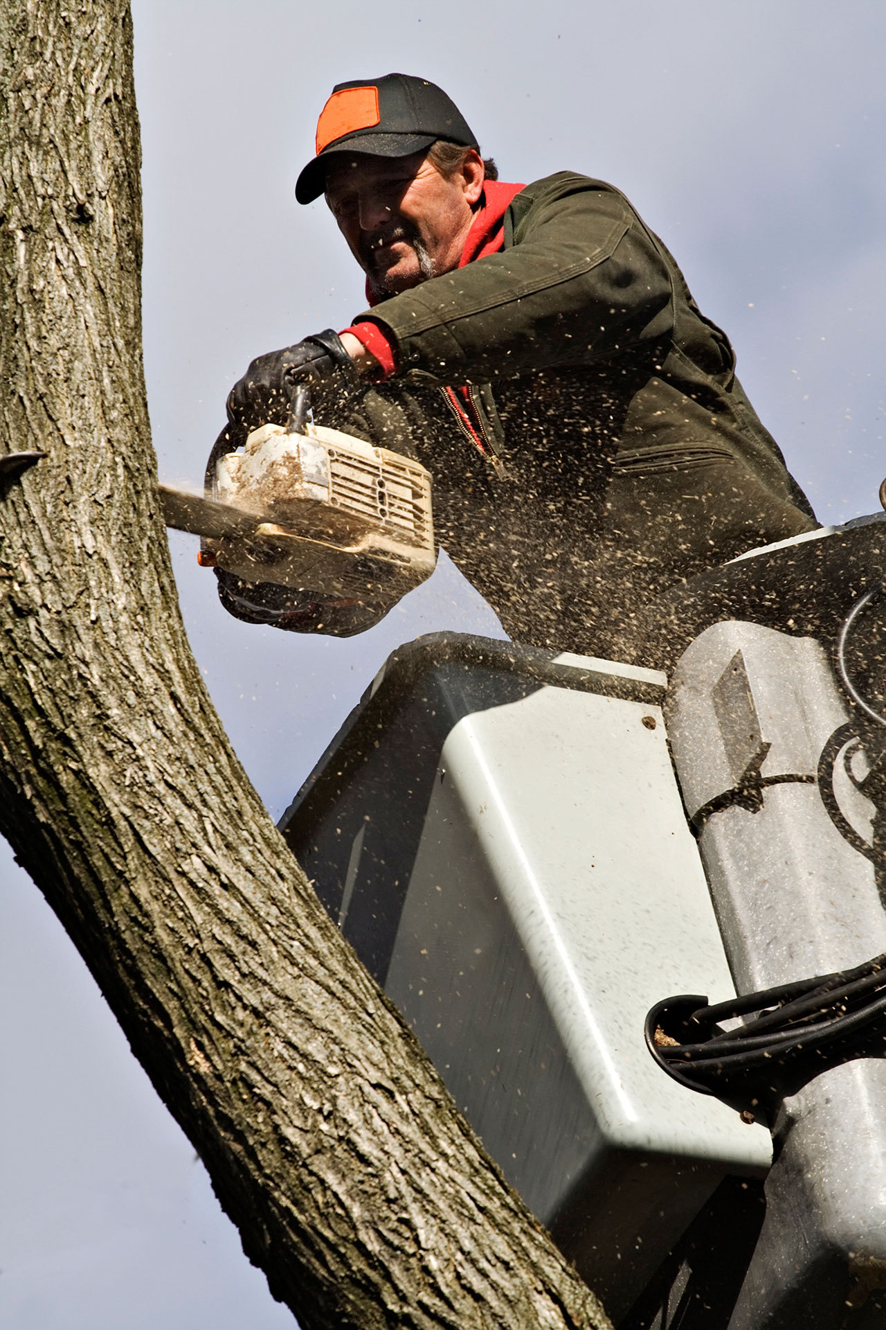 Nicols Tree Service, Tree Trimming