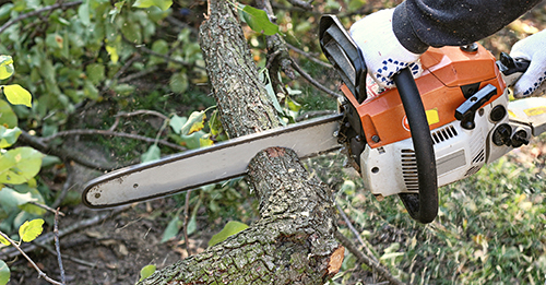 Stump Grinding, Nicols Tree Service