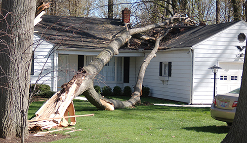 Tree Service, Meadville, PA