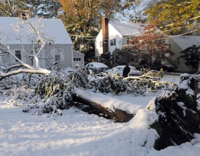 Tree & Crane Service, Meadville, PA