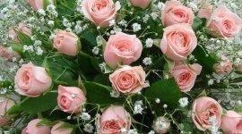 Collezione cofani, servizio interflora, fiori H24