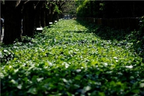 Manutenzione di parchi e giardini