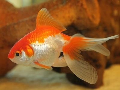 Prodotti per animali treviolo bergamo puppy planet for Dove comprare pesci rossi