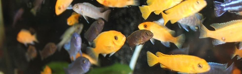 Negozio pesci Bergamo