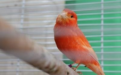 Uccellini casalinghi