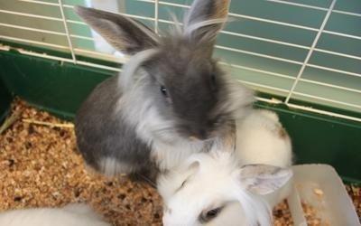 Coniglietti compagnia