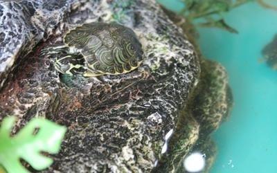 Negozio tartarughe