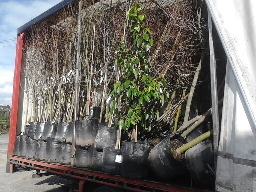 Road transport truck filled with nursery products in Wanganui