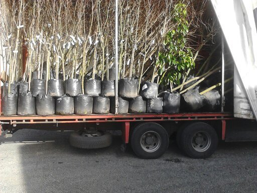 Plants in a freight truck