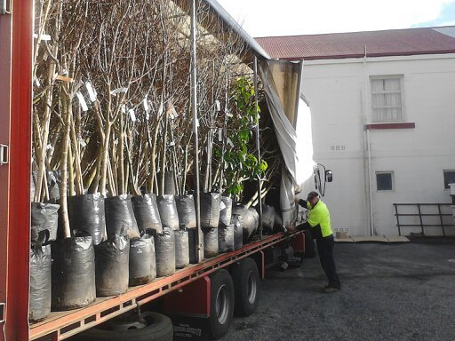 Professional loading plants into truck