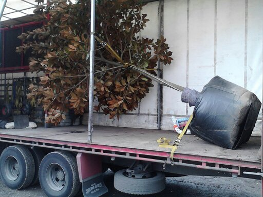 Tree on its side in a truck