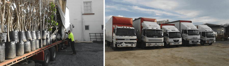 Trucks used for road freight services in Wanganui