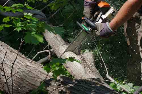 Quick tree removal being done by professional in Salisbury Mills, NY