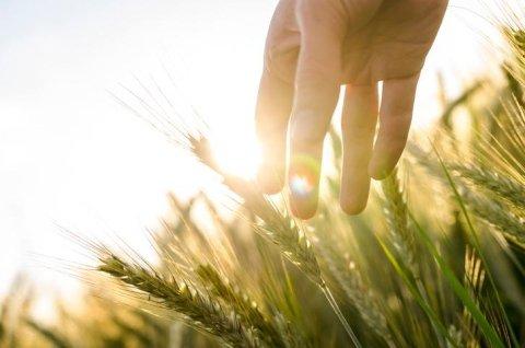 Assistenza fiscale agricoltura
