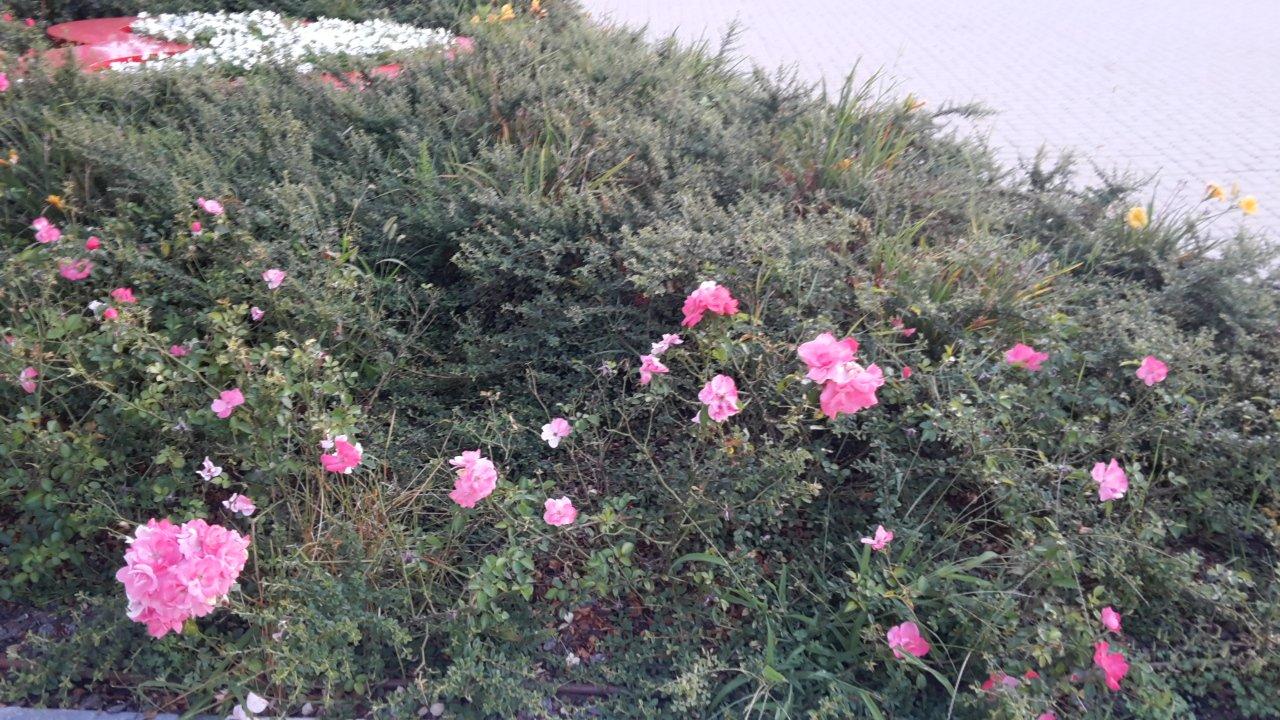 delle piante da terra e dei fiori rosa visti da vicino