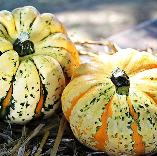 Festive Gourds
