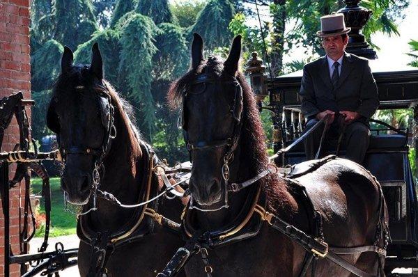 Carro funebre con cavalli