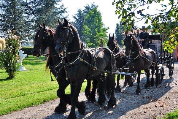 Cavalli e carrozza per trasporto salma
