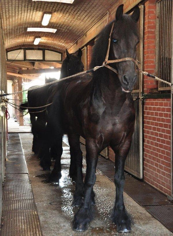 Cavalli onoranze funebri