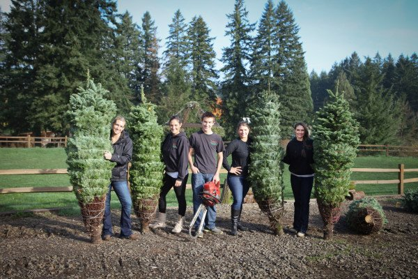 Come November We Are Gearing Up For Christmas Here At Lee Farms. We Offer  An Excellent Selection Of Fresh Cut And U Cut Noble And Grand Firs.