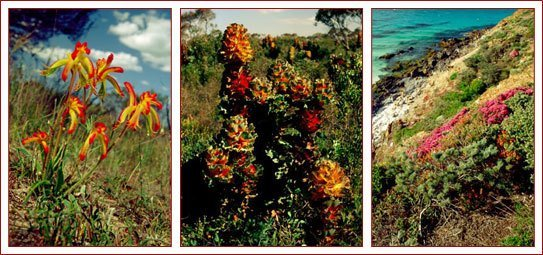Wildflowers enhancing the beauty