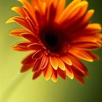 orange flower celebration of life ideas