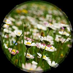 Le 4 stagioni Primavera