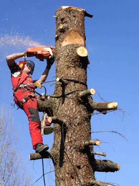 uomo che taglia un albero