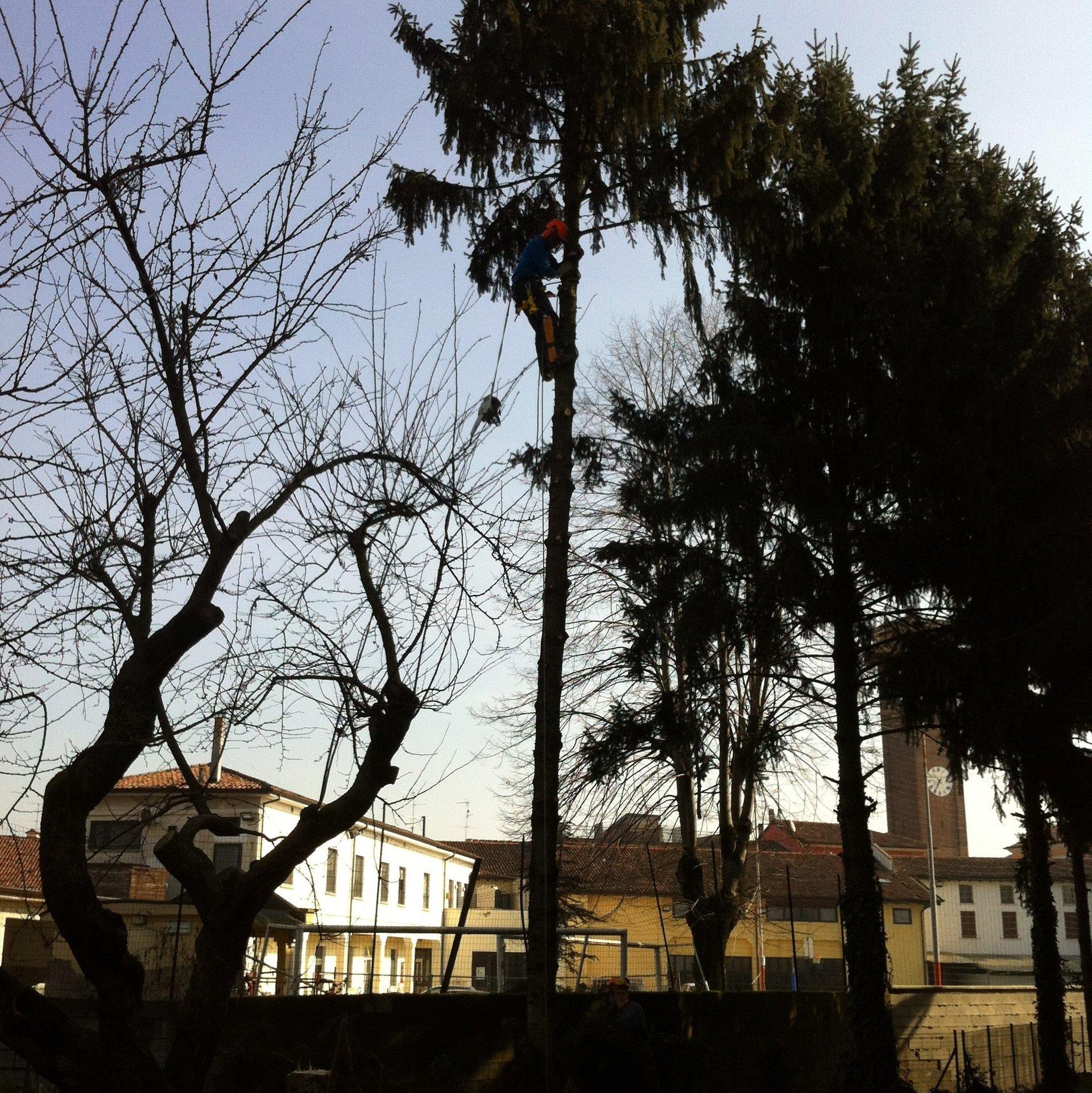 taglia alberi in tree climbing