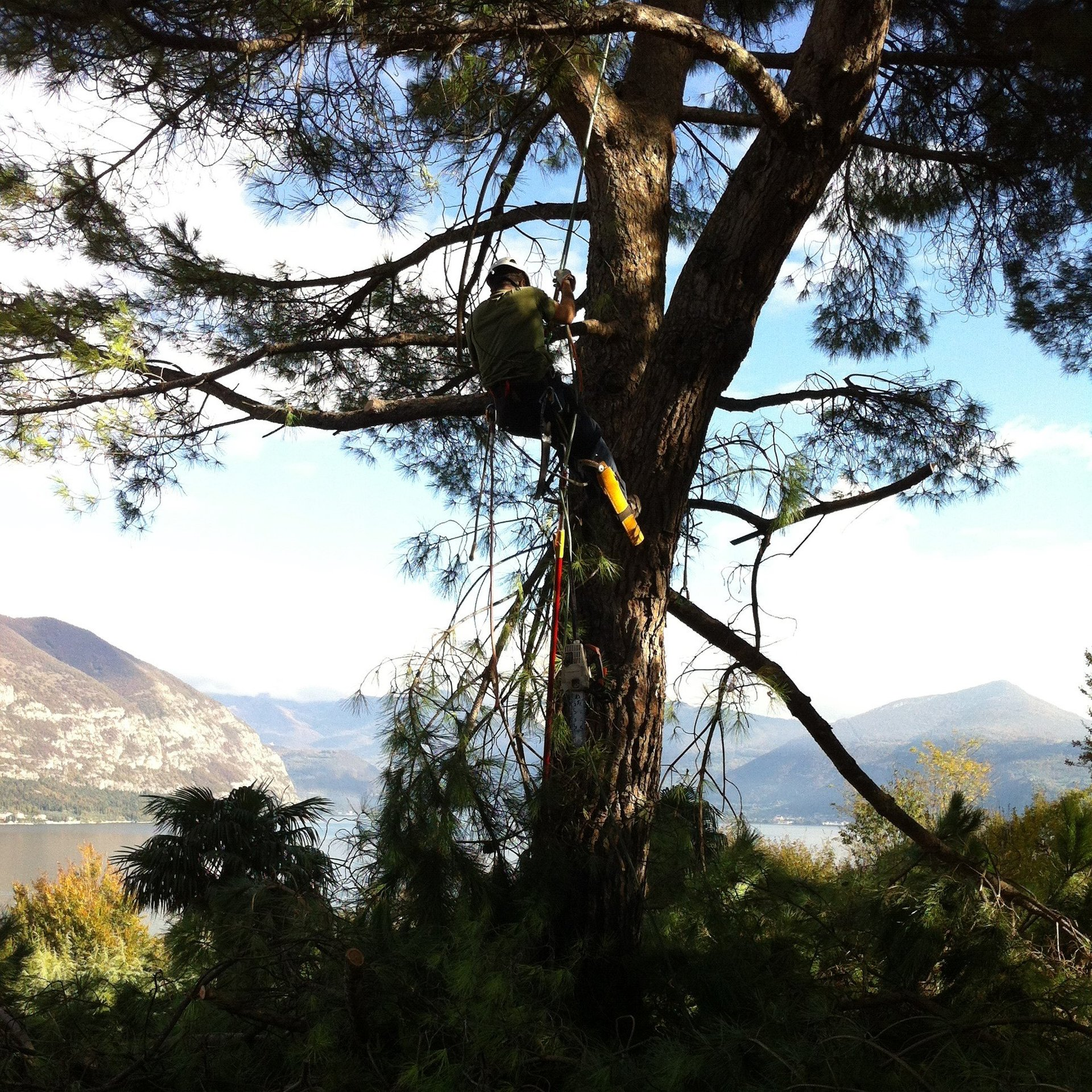 taglia albero in tree climbing