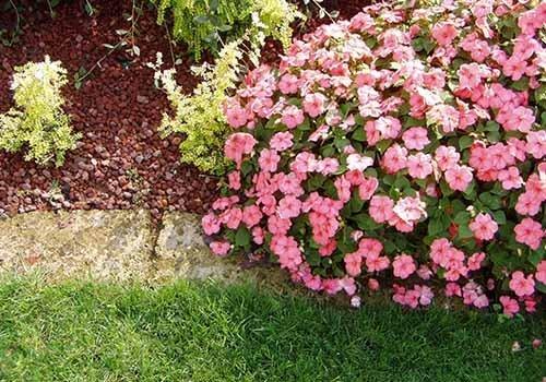 cespuglio di fiori rosa