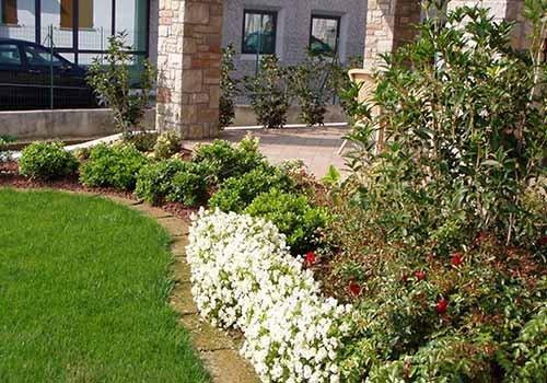cespugli di piante e fiori