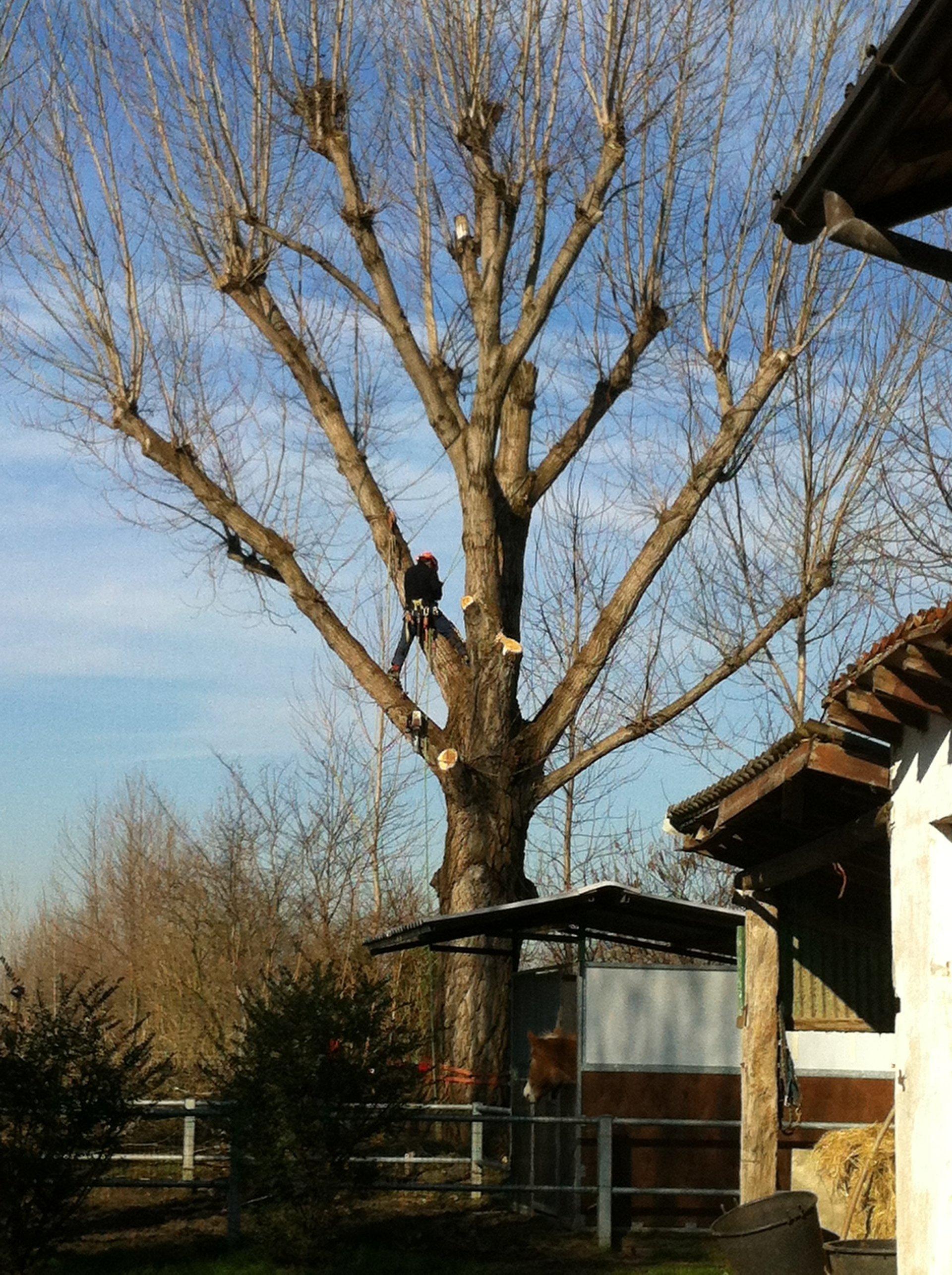 albero da tagliare in tree climbing