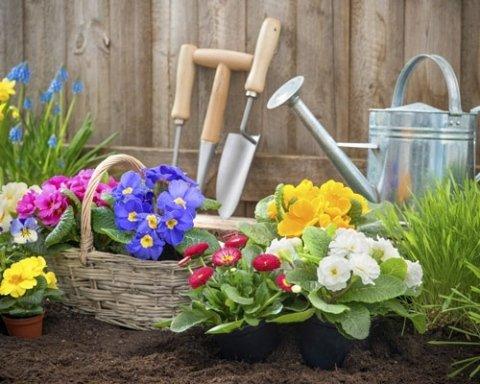 Fiori e attrezzi da giardinaggio