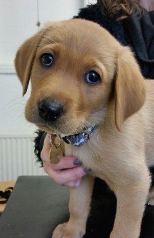 Puppy checks