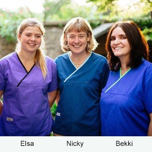 Our team of veterinary doctors