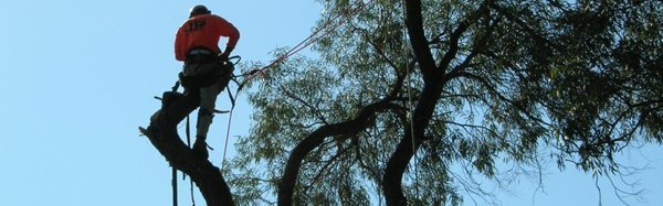 all tree solutions men climbing trees rope
