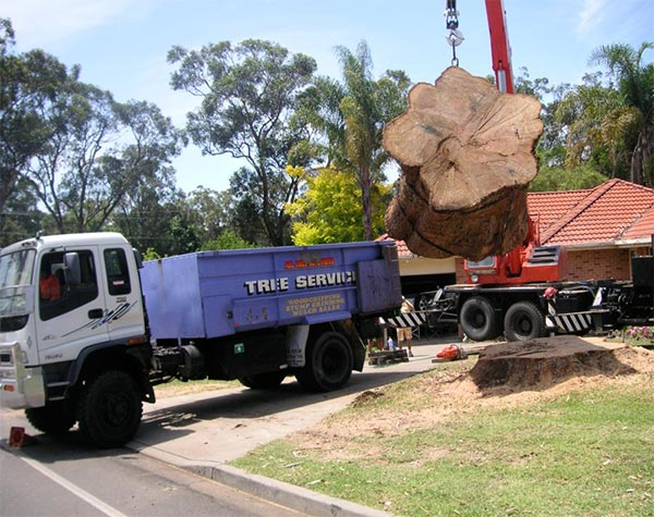 all tree solutions truck taking tree