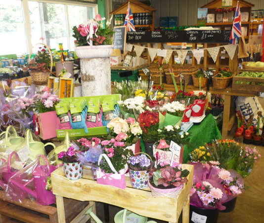 Plants in the Farmshop