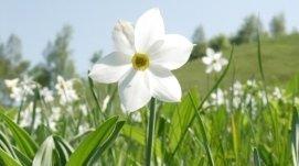 progettazione e realizzazione, fiori, tappeti erbosi