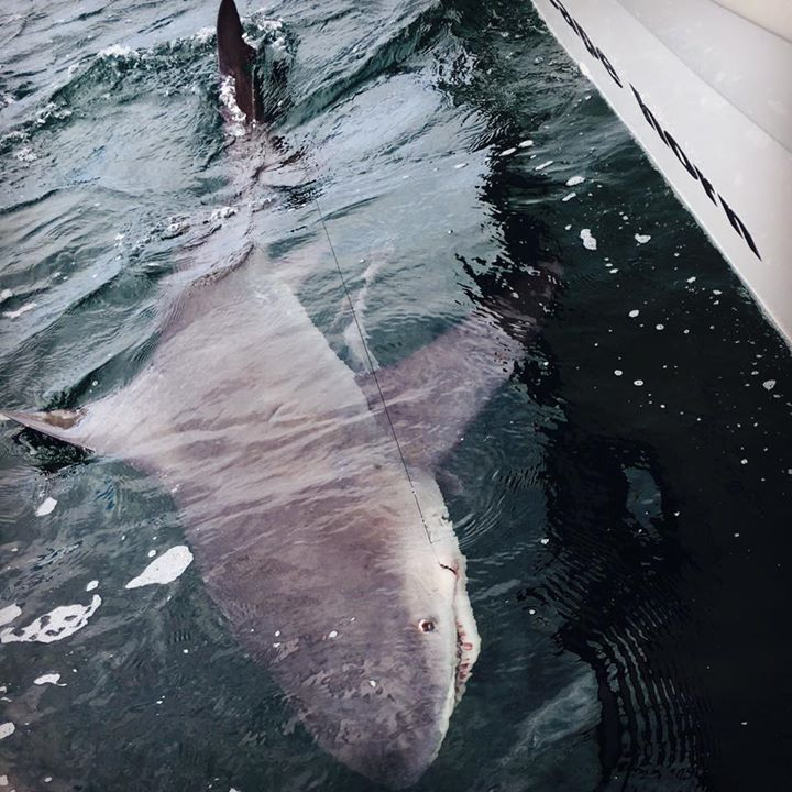 Dolphin Cruises Pensacola, FL