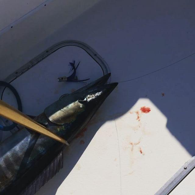 Deep Sea Fishing Pensacola Beach, FL